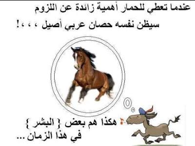 بالصور حكم ومواعظ مضحكة , امثال مصرية مضحكة 2733 5
