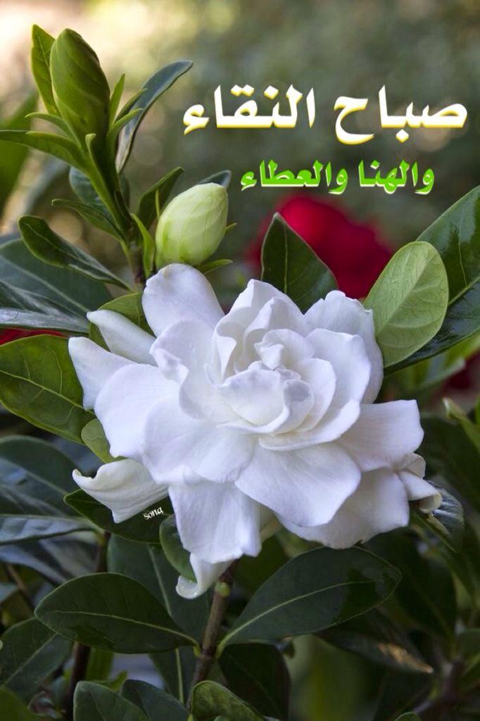بالصور اجمل صباح الخير , صور مكتوب عليها صباح الخير 2758 6