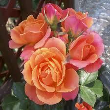 صور حكم عن الورد , كلام عن الورد
