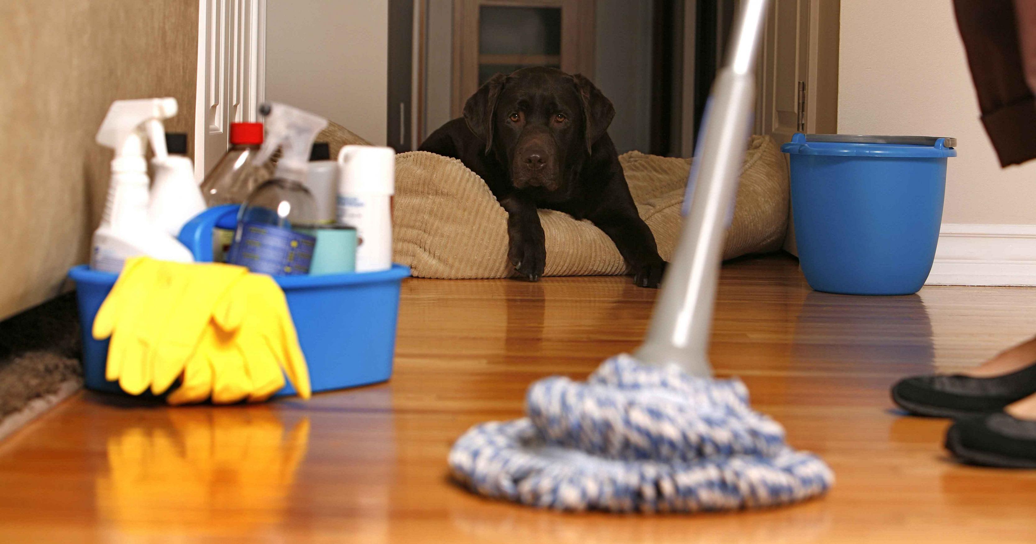 صورة تنظيف منازل , بالفيديو نظفي منزلك على طريقة الشركات