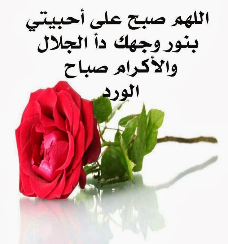 بالصور صباح البركة , صور رائعة صباح البركة 3239 10
