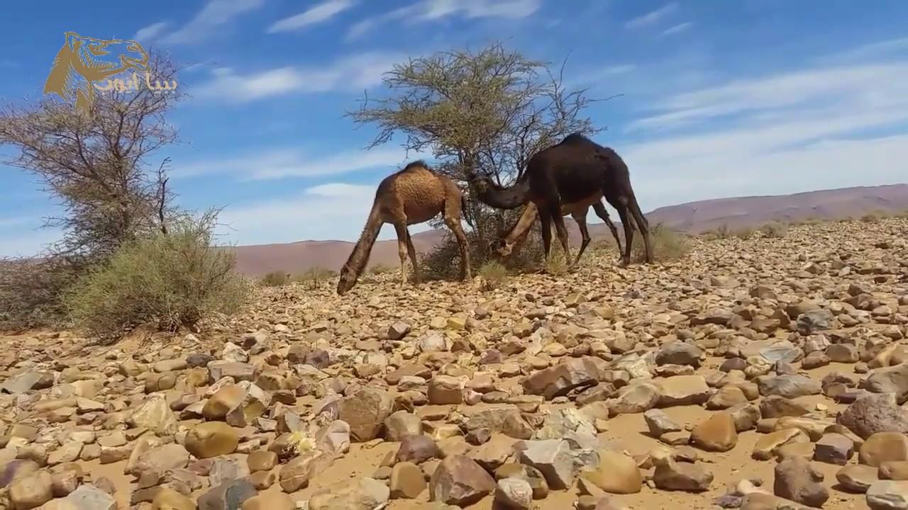 بالصور صور مناظر جميلة , اجمل مناظر الصحراء 4644 7