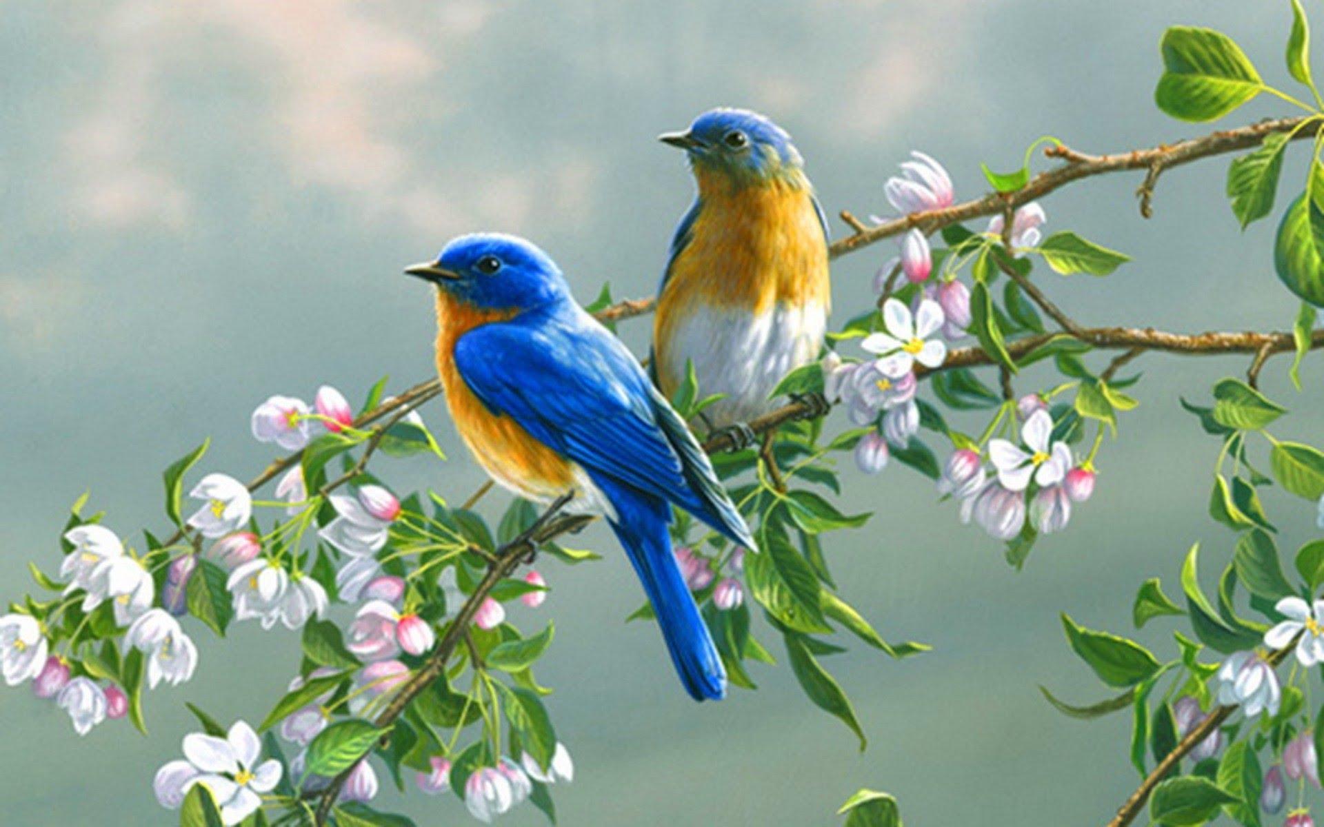 بالصور صور الورد , اجمل واحلى ورد 4661 10