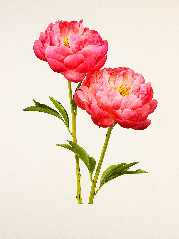 بالصور صور الورد , اجمل واحلى ورد 4661 6