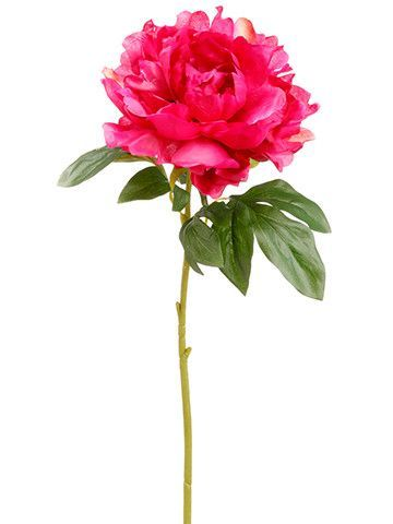 بالصور صور الورد , اجمل واحلى ورد 4661 7