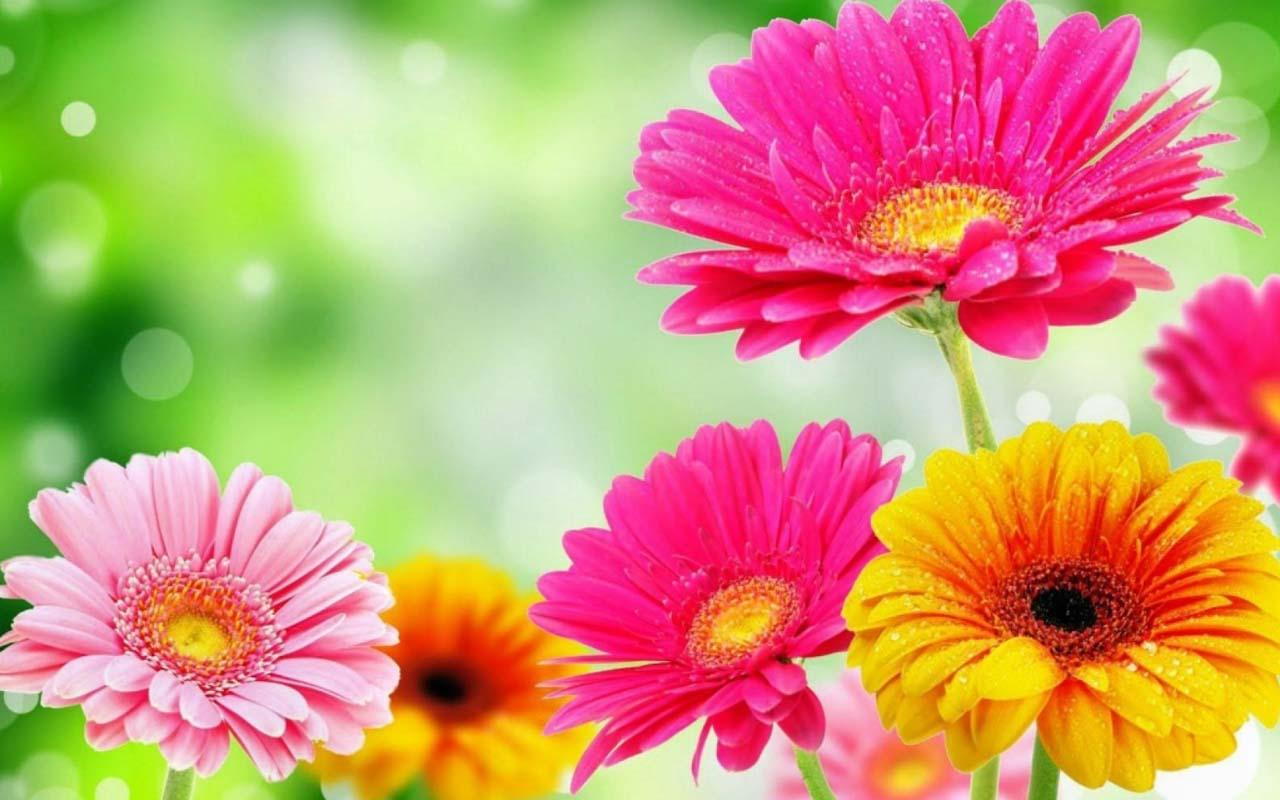 بالصور صور الورد , اجمل واحلى ورد 4661 8