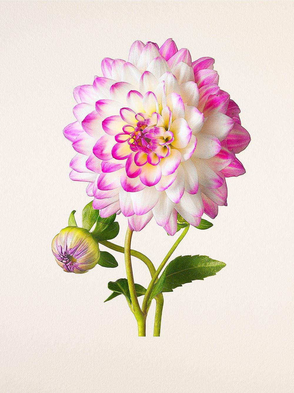 بالصور صور الورد , اجمل واحلى ورد 4661