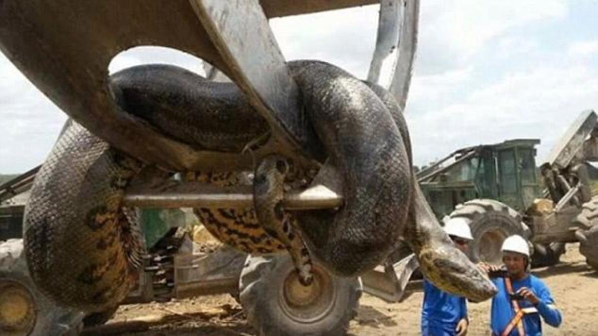 صورة اكبر ثعبان في العالم , صورة حيوانات من الطبيعة