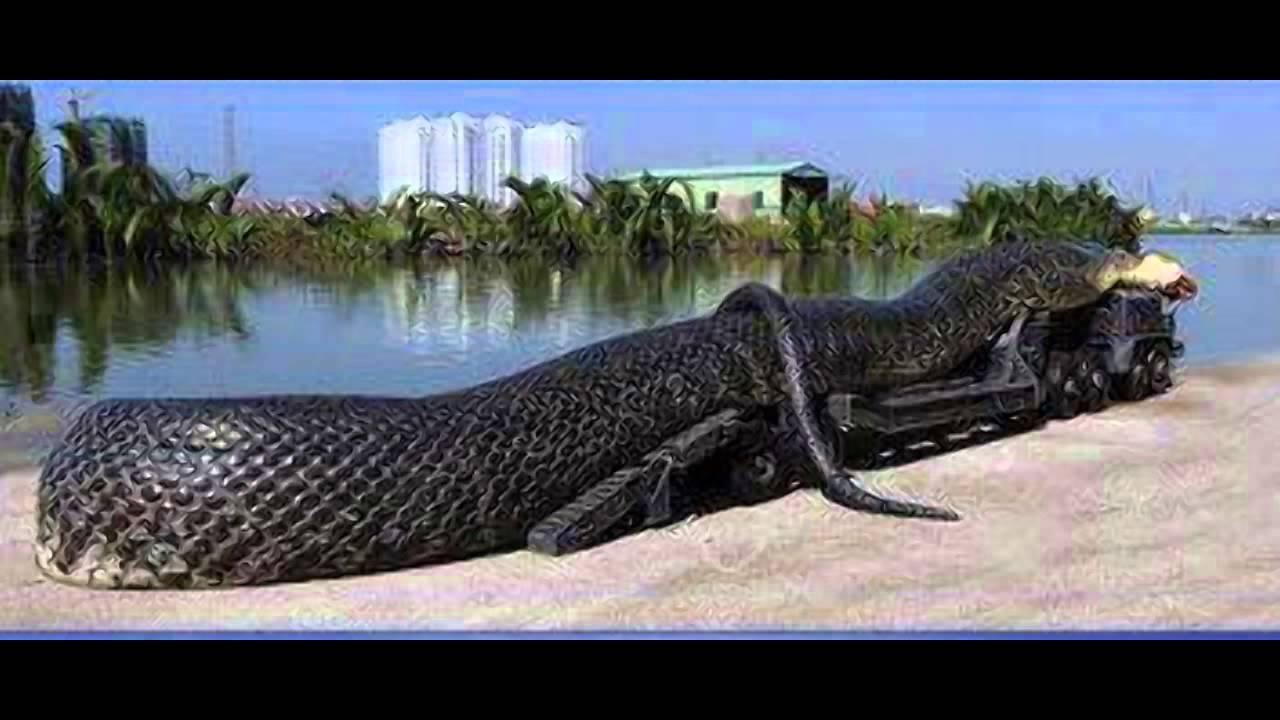 بالصور اكبر ثعبان في العالم , صورة حيوانات من الطبيعة 5268 5