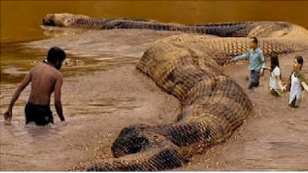 بالصور اكبر ثعبان في العالم , صورة حيوانات من الطبيعة 5268 7
