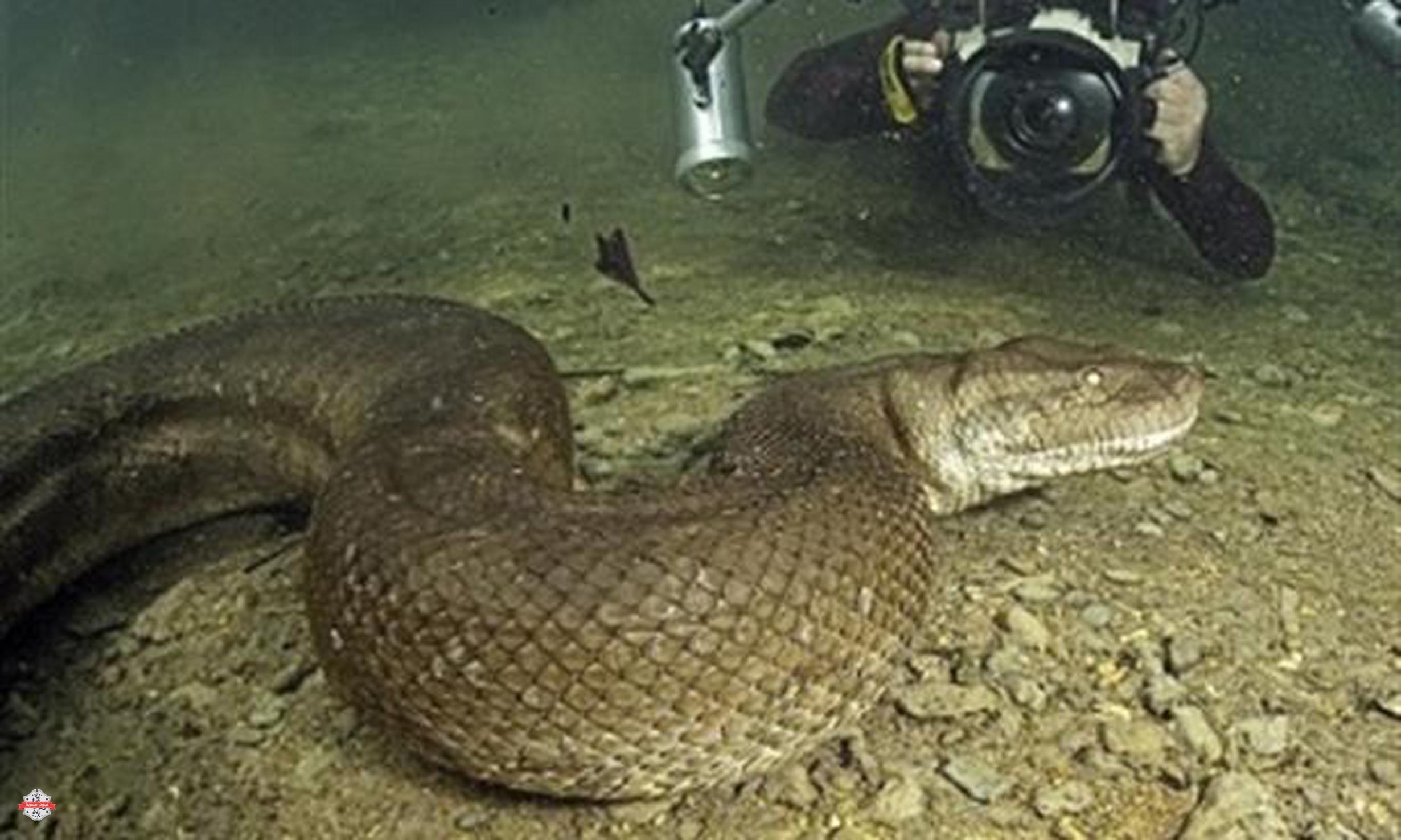 بالصور اكبر ثعبان في العالم , صورة حيوانات من الطبيعة