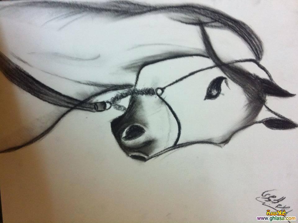 بالصور رسومات سهله وحلوه , لمن لايجيد الرسم 6292 3