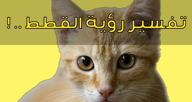 صورة رؤية القطط بالمنام , تفسير منام رؤية القطط