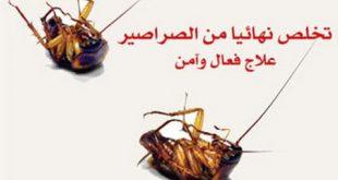 صورة القضاء على الصراصير , التخلص من مشكلة الصراصير بسرعه وسهوله