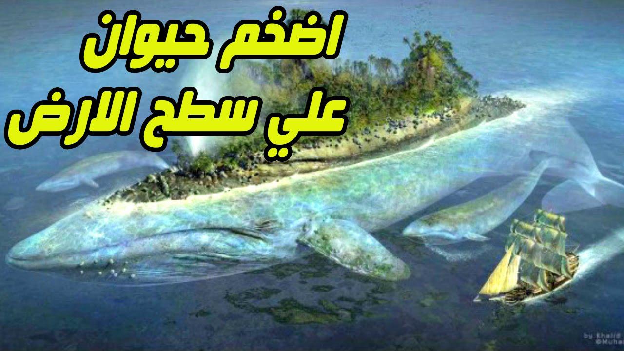 صورة اكبر حيوان في العالم , معلومات قيمة عن اكبر حيوان في العالم
