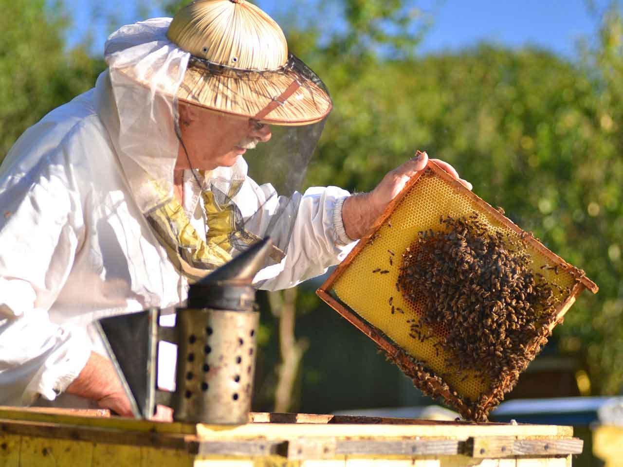 صورة تربية النحل , طرق تربية النحل الصحيحه