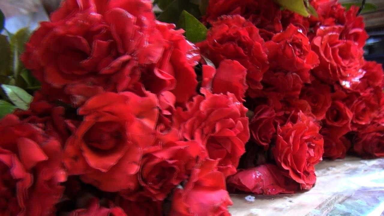 صورة صور ورود طبيعيه , اجمل الزهور بالوان رائعة