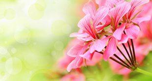 صوره صور اجمل ورد , زهور جميلة و ملونة
