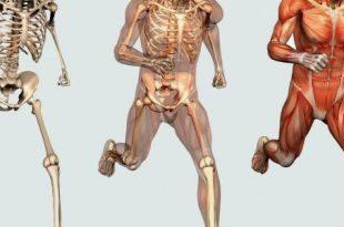 صورة كم عدد عضلات جسم الانسان , فكر وحل اللغز