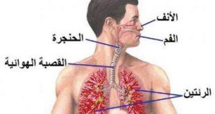 صور علاج حساسية الانف , علاج بالاعشاب لحساسية الانف