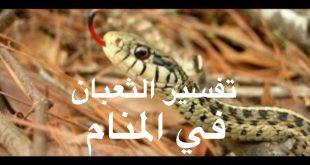 صوره رؤية الثعبان في المنام وقتله , ما تفسير الحلم بالثعبان وموته