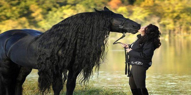 صور اجمل حصان في العالم , شاهد و تعرف علي اجمل حصان في العالم