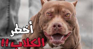 بالصور اشرس انواع الكلاب , تعرف علي اخطر و اشرس 10 كلاب عالميا 5080 11 310x165