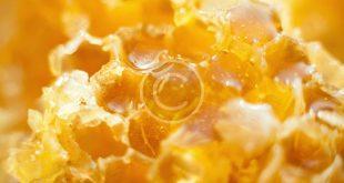 صورة فوائد غذاء ملكات النحل , معلومات عن اهميه غذاء ملكات النحل