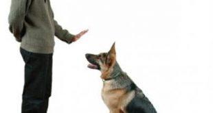 صوره كيفية تدريب الكلاب , طريقة ممتازة لتدريب الكلاب