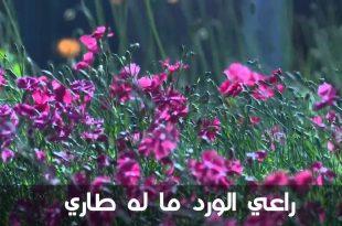 صور كلمات عن الورد , عبارات جميلة عن الزهور