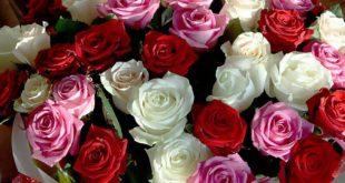 صوره تحميل صور ورد , شاهد خلفيات لاجمل الزهور