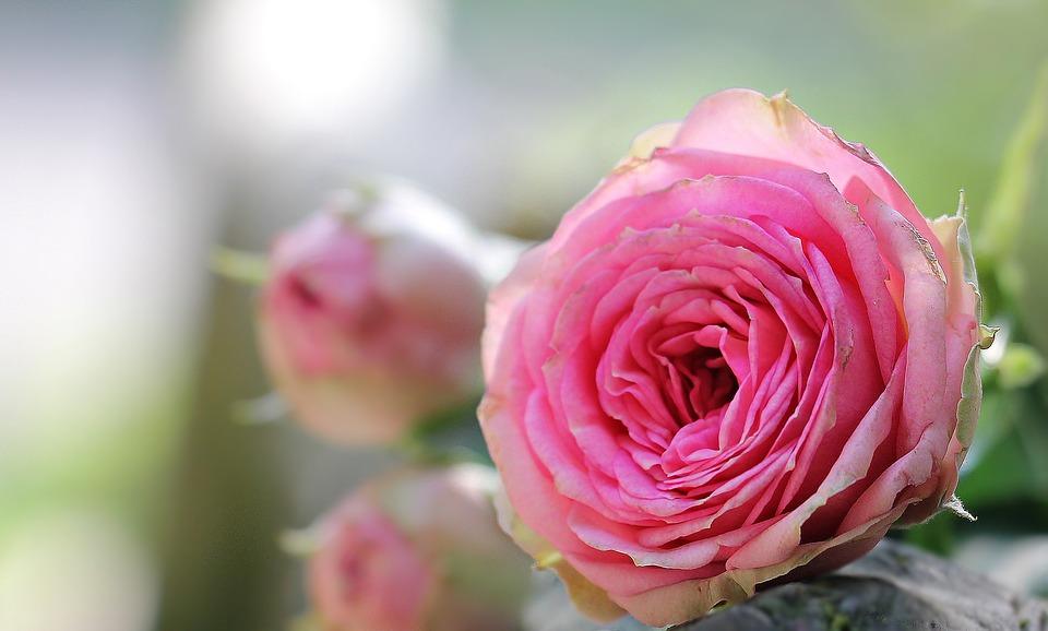 بالصور صور جميله جدا , اجمل المناظر في صور 3565 3