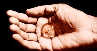 بالصور جرعة سايتوتك للاجهاض , تعرفي على الجرعة المناسبة من سايتوتك للاجهاض 3594 3 310x165