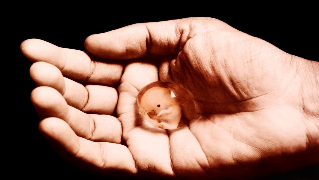 بالصور جرعة سايتوتك للاجهاض , تعرفي على الجرعة المناسبة من سايتوتك للاجهاض 3594
