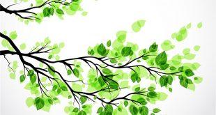 بالصور خلفية خضراء , اروع الخلفيات الخضراء 3644 11 310x165