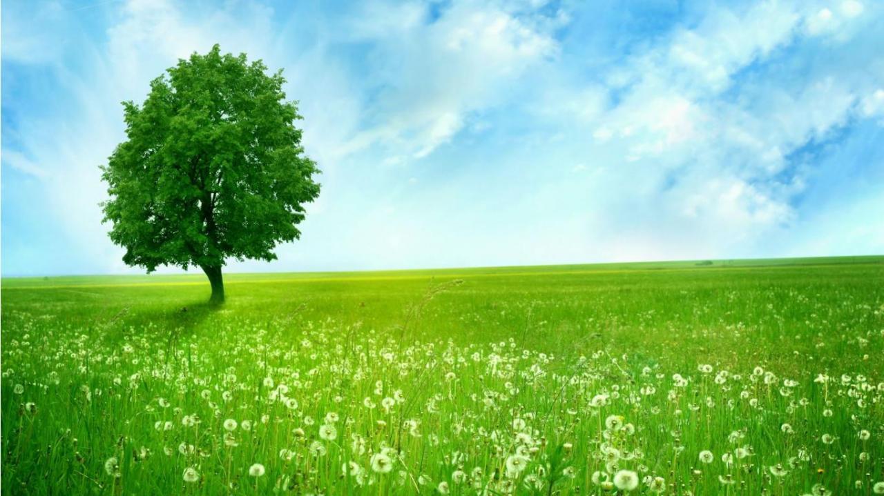 بالصور خلفية خضراء , اروع الخلفيات الخضراء 3644 5