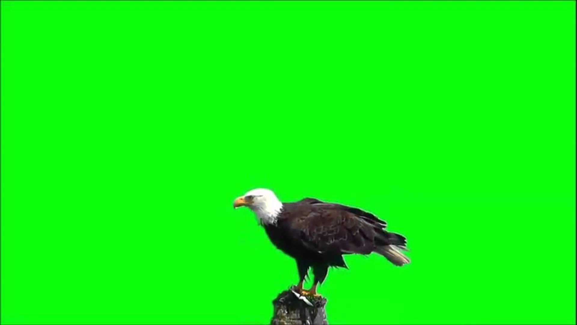 بالصور خلفية خضراء , اروع الخلفيات الخضراء 3644 8