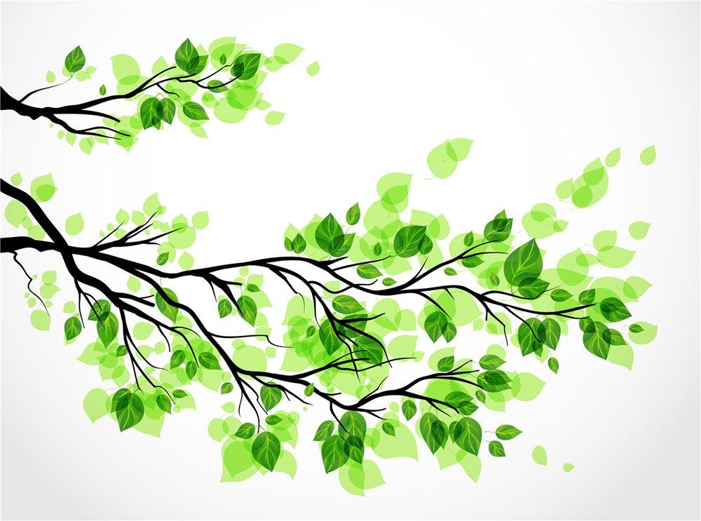 صوره خلفية خضراء , اروع الخلفيات الخضراء