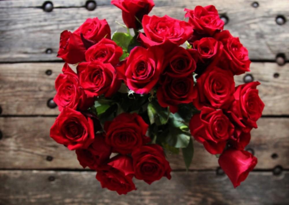 بالصور صور اجمل الورود , اجمل الورود واحلاها 3662 11