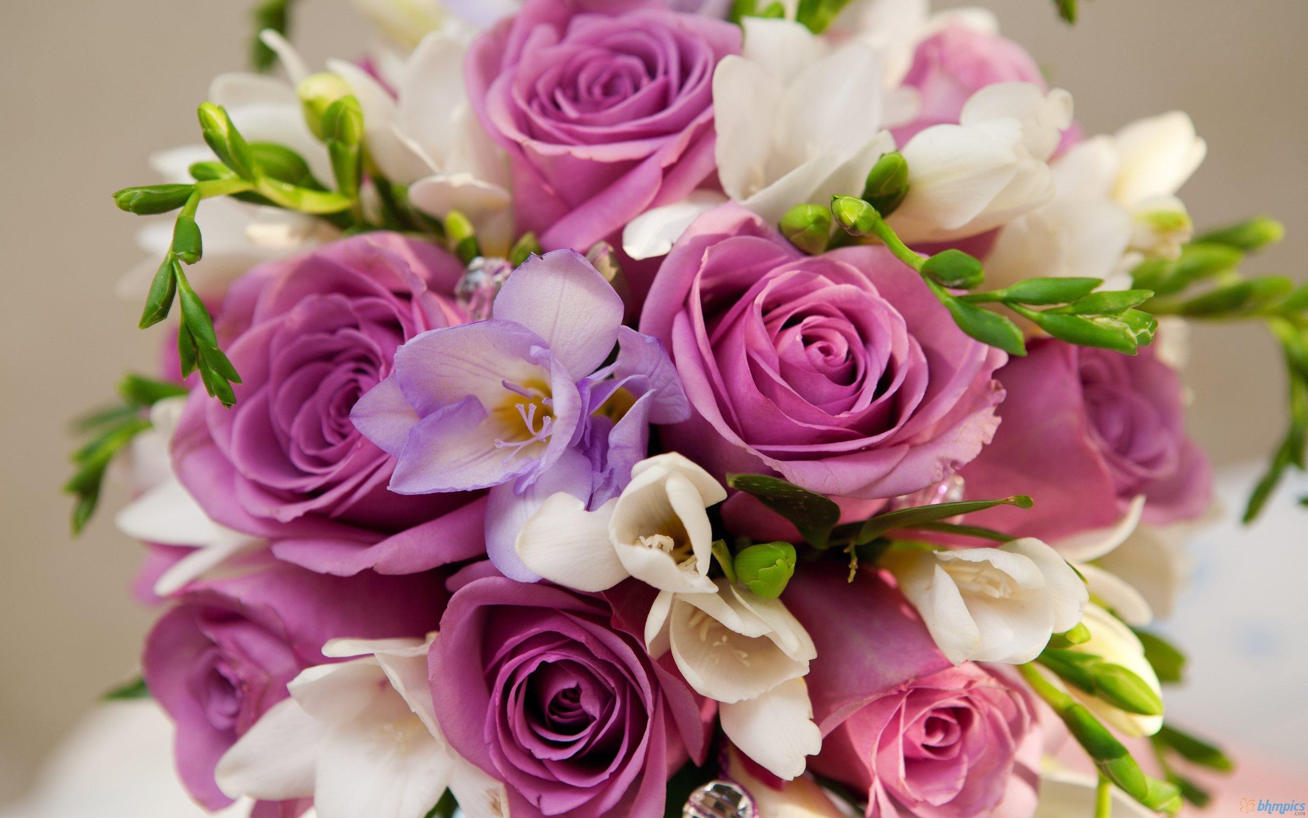 بالصور صور اجمل الورود , اجمل الورود واحلاها 3662 4