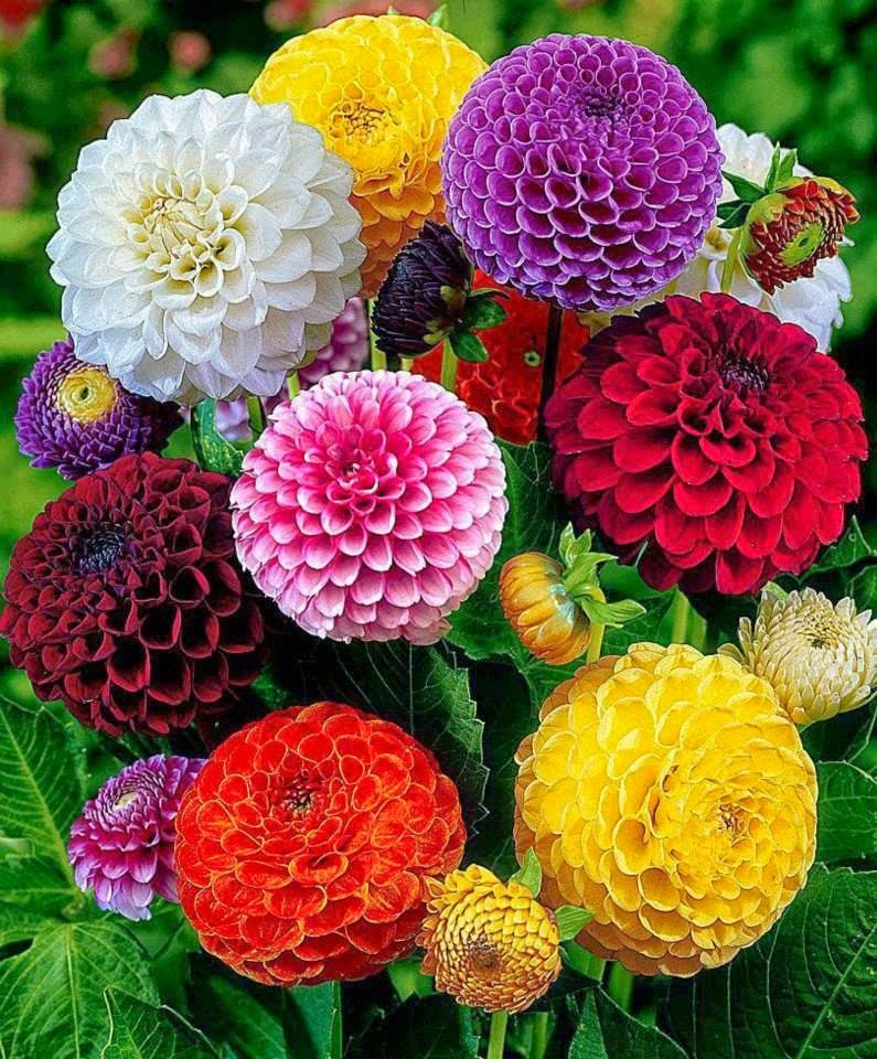 بالصور صور اجمل الورود , اجمل الورود واحلاها 3662 5
