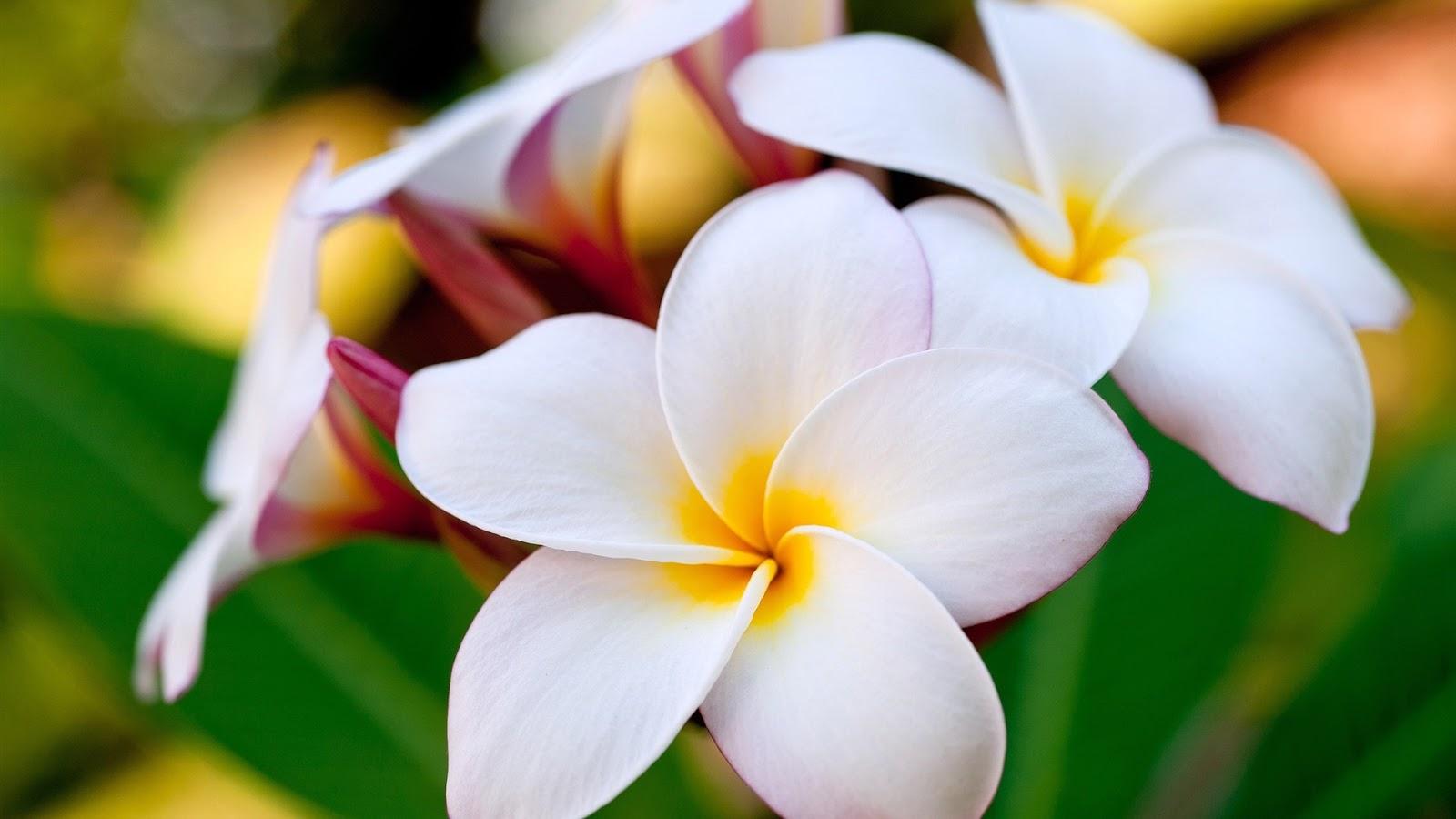 بالصور صور اجمل الورود , اجمل الورود واحلاها 3662 9