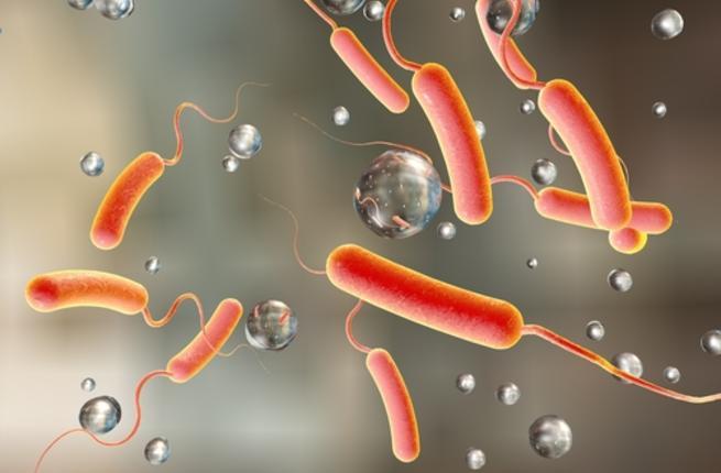 بالصور مرض الكوليرا , معلومات عن مرض الكوليرا 375 1