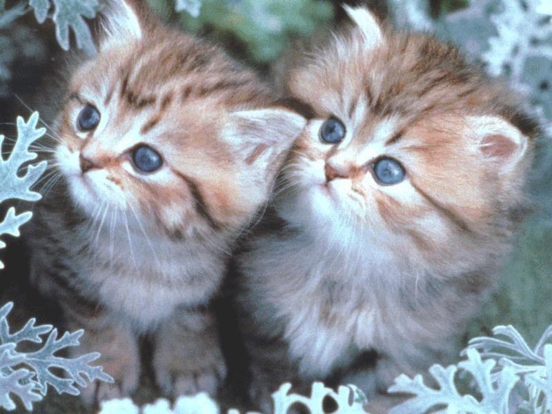 بالصور اجمل الصور للقطط في العالم , صور متعدده للقطط في العالم 398 1