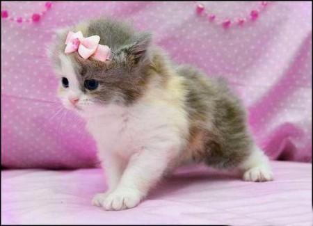 بالصور اجمل الصور للقطط في العالم , صور متعدده للقطط في العالم 398 10