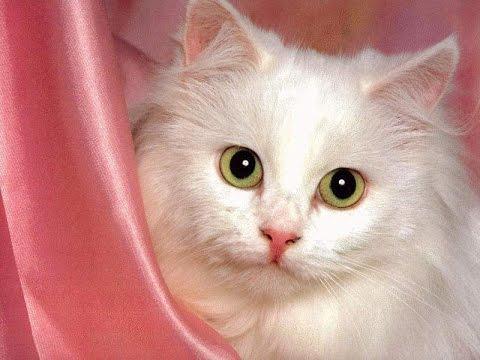 بالصور اجمل الصور للقطط في العالم , صور متعدده للقطط في العالم 398 11