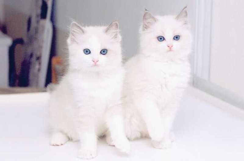 بالصور اجمل الصور للقطط في العالم , صور متعدده للقطط في العالم 398 2
