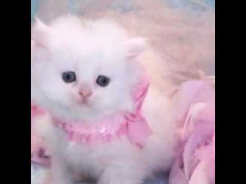 بالصور اجمل الصور للقطط في العالم , صور متعدده للقطط في العالم 398 3