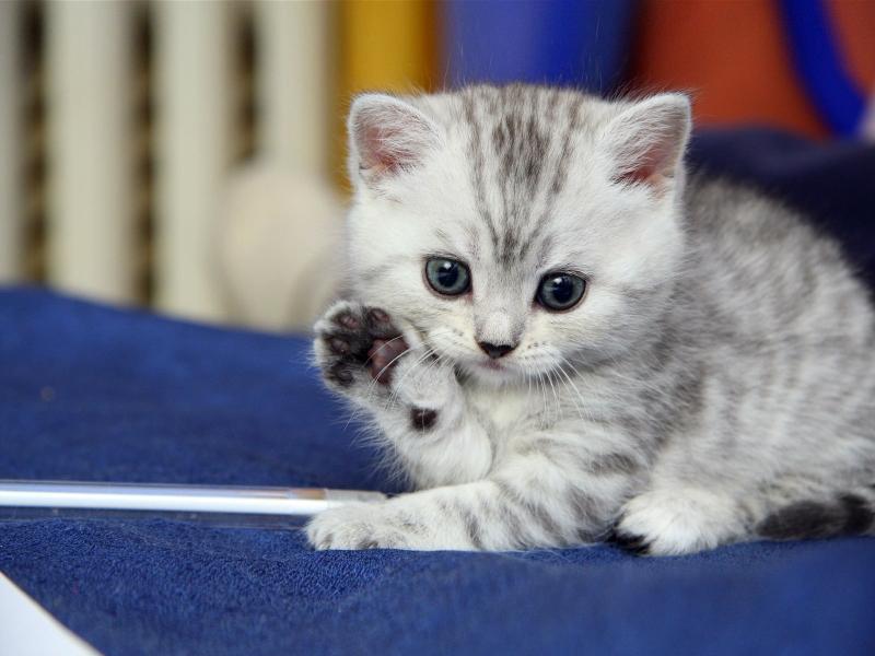 بالصور اجمل الصور للقطط في العالم , صور متعدده للقطط في العالم 398 4