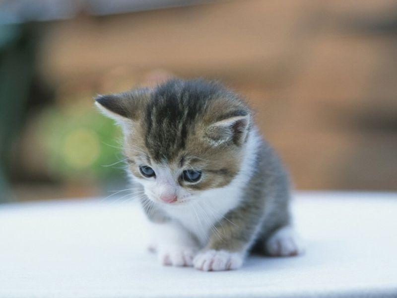 بالصور اجمل الصور للقطط في العالم , صور متعدده للقطط في العالم 398 5
